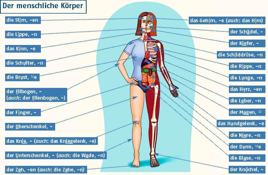 правильному уходу часть человеческого тела из 3 букв грануляторы